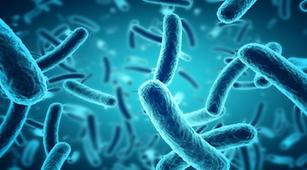Ini yang Perlu Diketahui Tentang Bakteri dan Bakteriologi