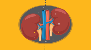 Cari Tahu Pentingnya Fungsi Ginjal bagi Tubuh