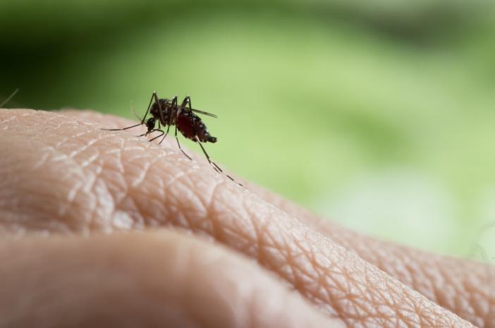 Ini 5 Fakta Penting Tentang Demam Berdarah