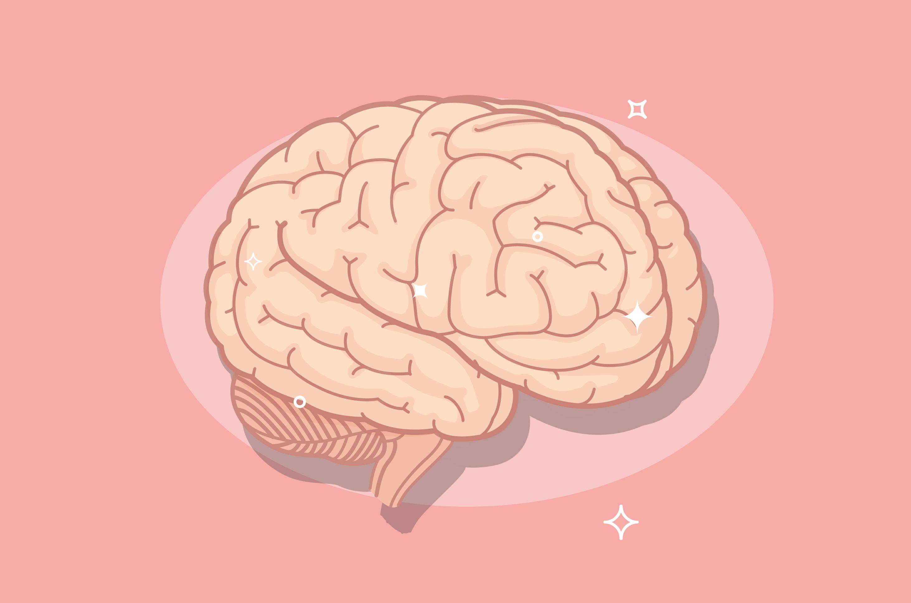 Makanan Pengaruhi Ukuran Otak, Benarkah?