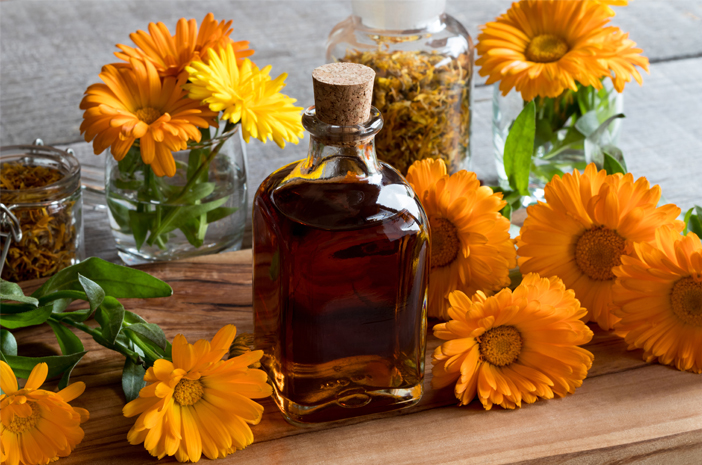 bunga calendula bahan produk kecantikan yang bermanfaat