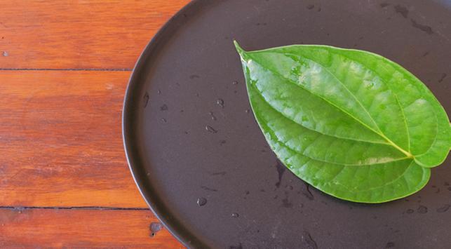 membersihkan miss v dengan rebusan daun sirih, manfaat daun sirih, kesehatan miss v