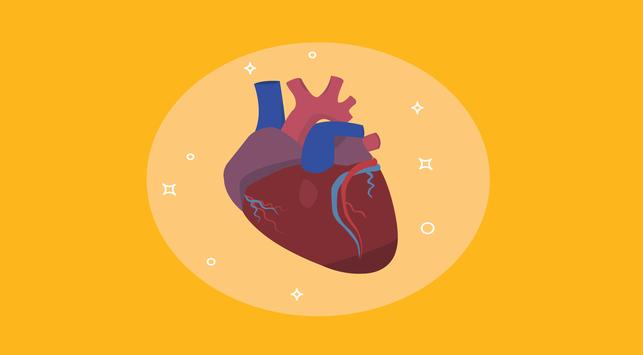 penyakit jantung, penyakit jantung koroner,sakit jantung,jantung koroner