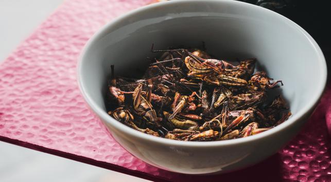 makan belalang, manfaat makan belalang,manfaat belalang,manfaat belalang untuk kesehatan