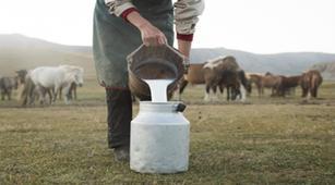 Adakah Manfaat Susu Kuda Terhadap Kesehatan?