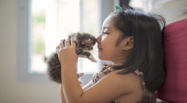 mencegah asma, kucing mencegah asma pada bayi