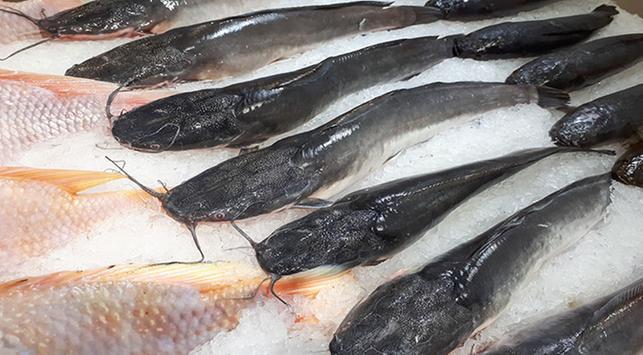 Makan Ikan Lele Berdampak Negatif Untuk Kesehatan Benarkah