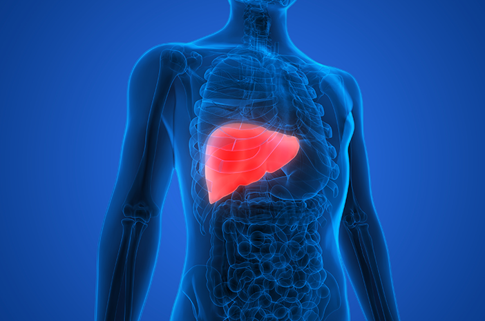76+ Gambar Organ Hati Yang Rusak Paling Hist