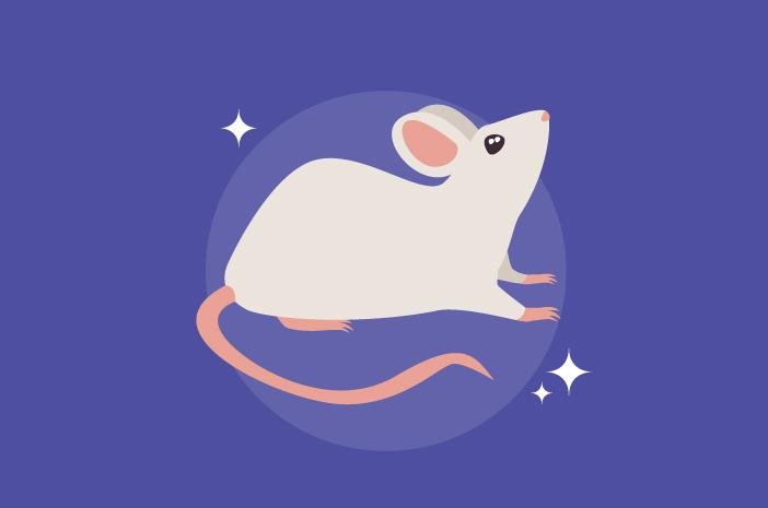 Hepatitis E Bisa Ditularkan Tikus pada Manusia