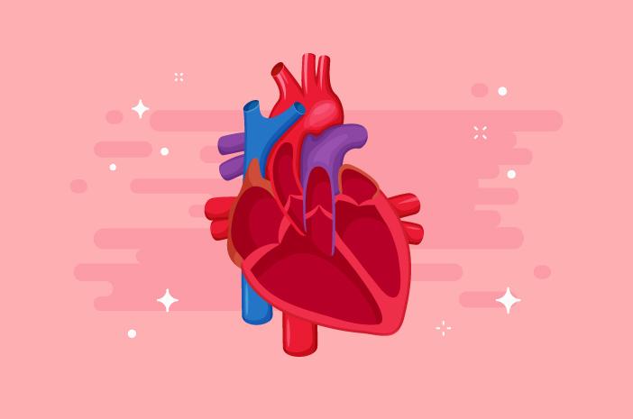 Inilah Penyebab Penyakit Katup Jantung pada Orang Dewasa