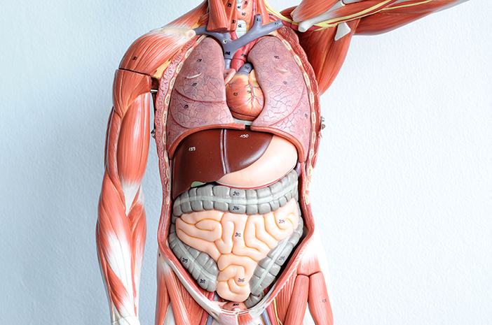 Patologi Anatomi Pemeriksaan Struktur Tubuh Untuk Diagnosis Penyakit