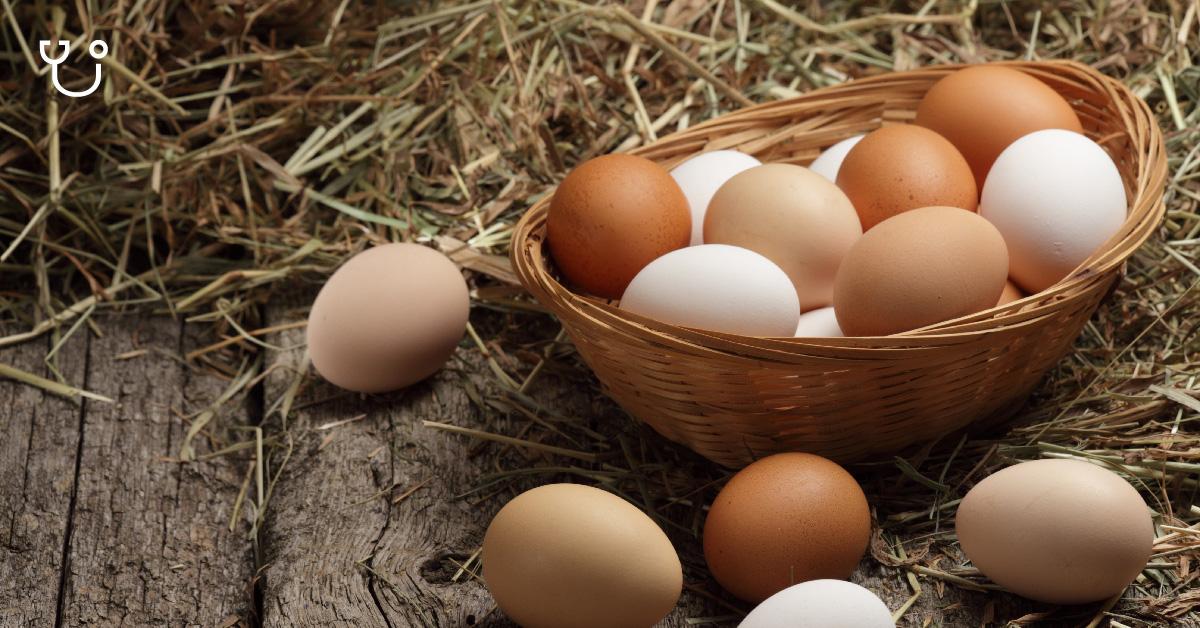 Telur Mencegah Presbiopi, Benarkah?